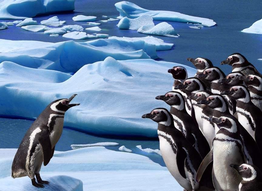 pinguinos-organizacion.jpg (864×630)